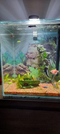 Akwarium Aquael 50 litrów z pełnym wyposarzeniem