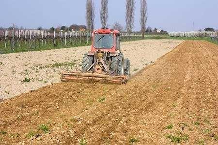 Limpeza de Terrenos