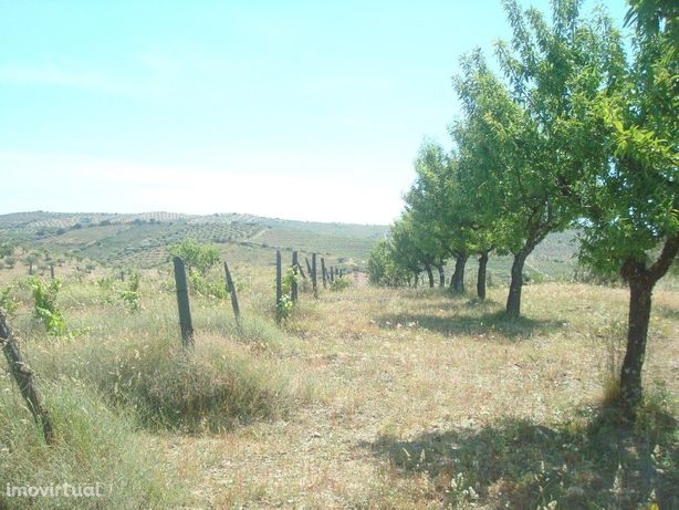 Terreno agrícola de 1,5 hectares em Almendra