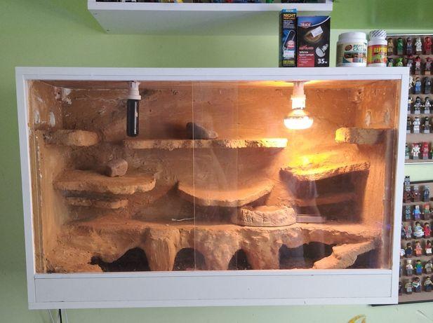 4 Gekony lamparcie w pełni wyposażone terrarium duży zestaw na ścianę
