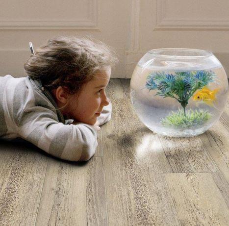 Аквариум круглый стекло,флорариум,ваза для цветов