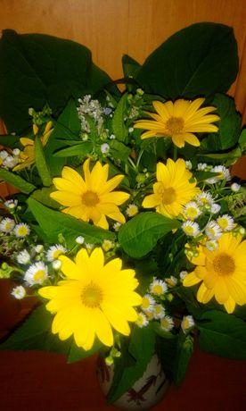 Букет на троицу красивые полевые цветы ромашка василек полынь