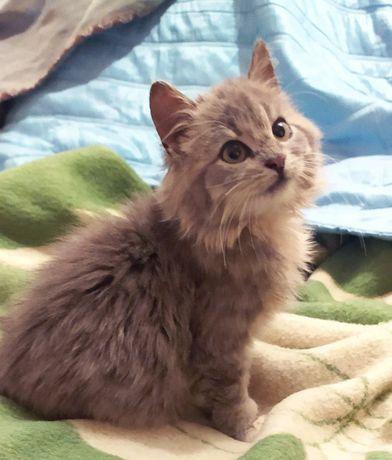 котенок девочка бесплатно