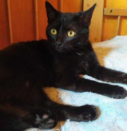 Красивая черная кошечка-подросток в поисках семьи