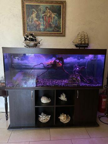 Аквариум с экзотическими рыбами