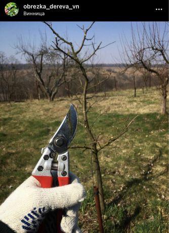 Обрезка деревьев Обрезка сада Весенняя обрезка дерева Прививка Щепа