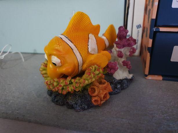 Peixe nemo oxisnario