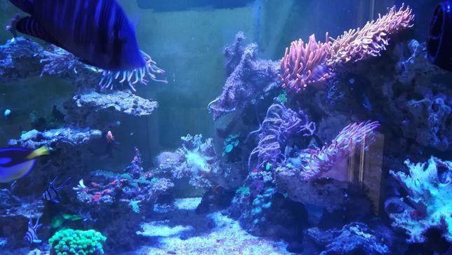 Morskie akwarium-żywa woda