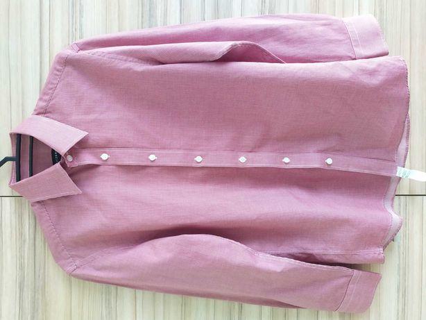 koszula Koszule męskie Wólczanka 39