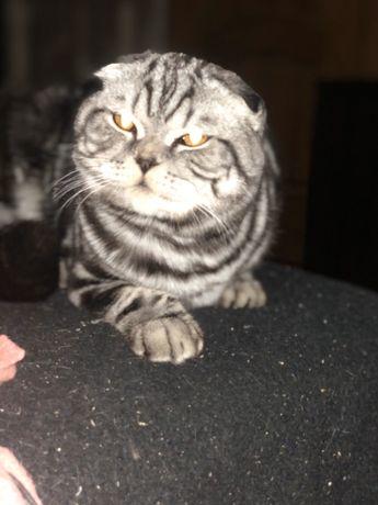 Котёнок Шикарный малыш -Диор