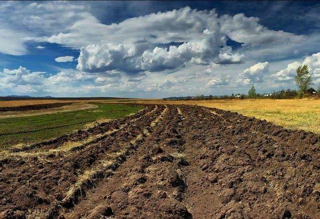 Продам земельный пай.Земля сельхоз  назначения.