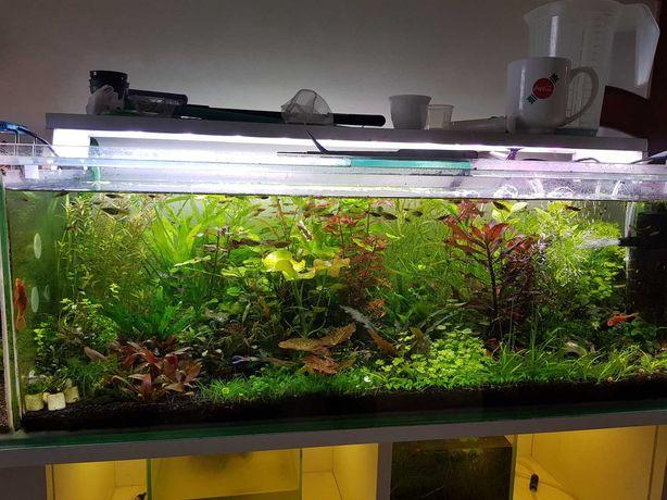 Akwarystyka, rośliny, krewetki, rybki / WYSYŁKA i DOSTAWA do 15km