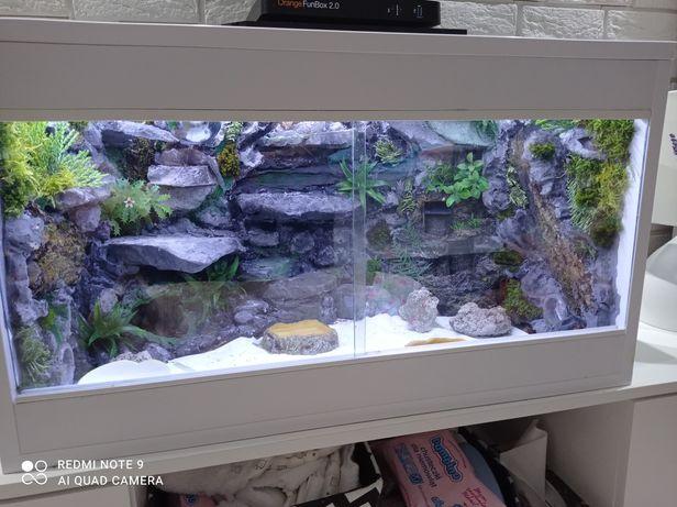 Terrarium gekon agama jaszczurka