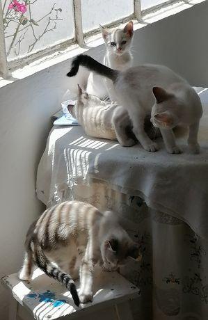 Gatos procuram novo lar...