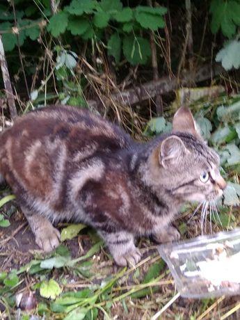 Ищет дом котенок-мальчик