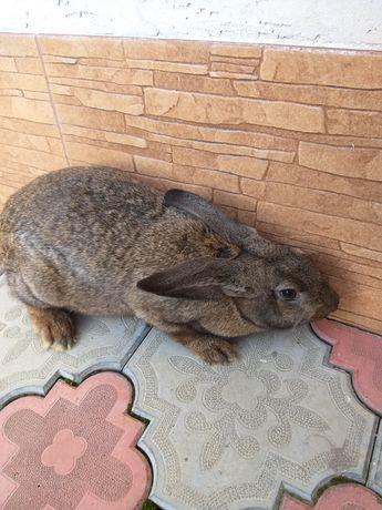 Продам кроликів Новоселиця