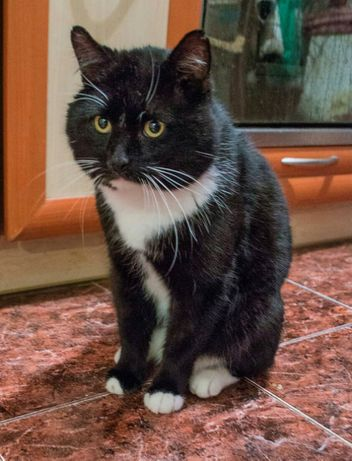 Шикарный кот Маркиз ищет хозяина!