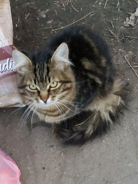 Красивый молодой котик ищет дом! Краматорск - изображение 1