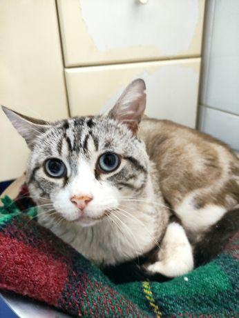 Betty gato para adoção