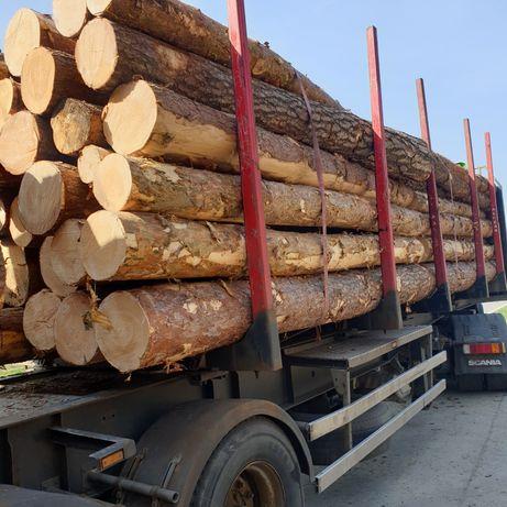 drewno sosna 3.8m kłoda sosnowa 5.9m dłuzyca 11.8m drzewo