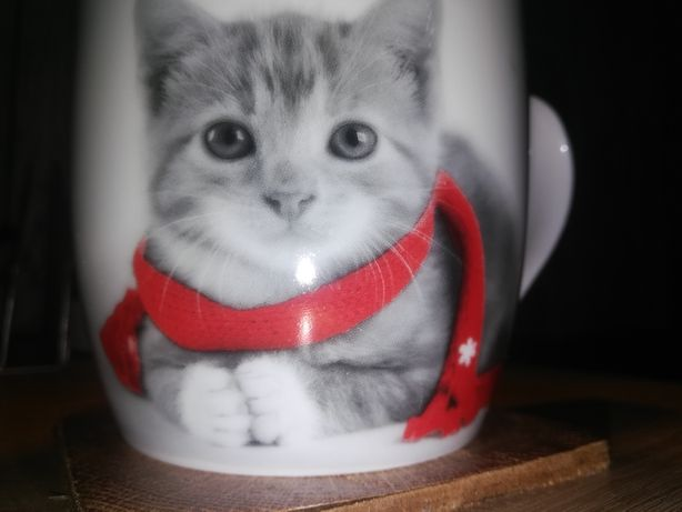 Oddam w dobre ręce kotek wabi się wacek
