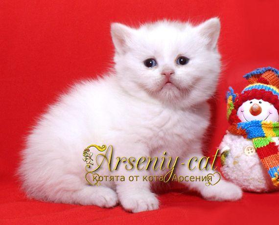 """Плюшевый """"медвежонок"""" - белый котенок."""