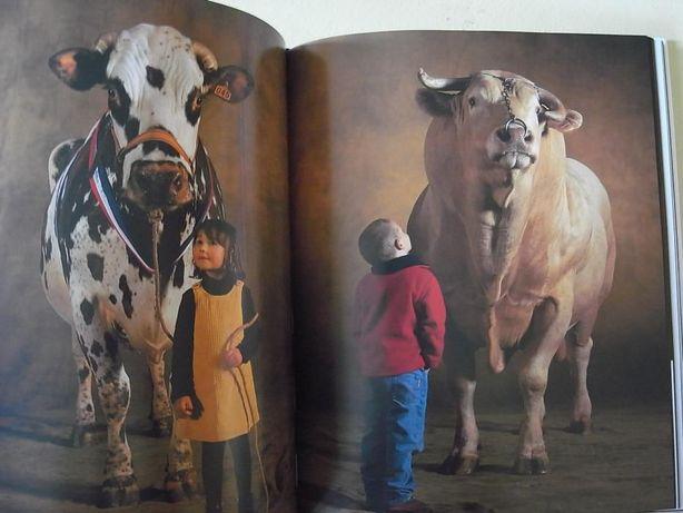 yann arthus bertrand being a photographer livro fotografia + dvd