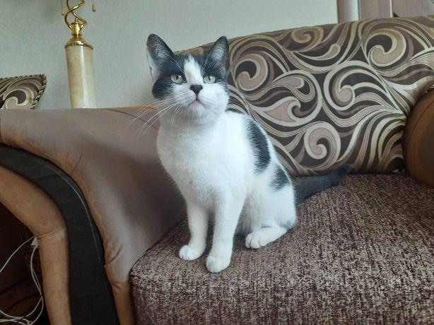 Отдам черно -белую кошку, стерилизована, 1 год