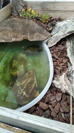 Aquario  tartaruga