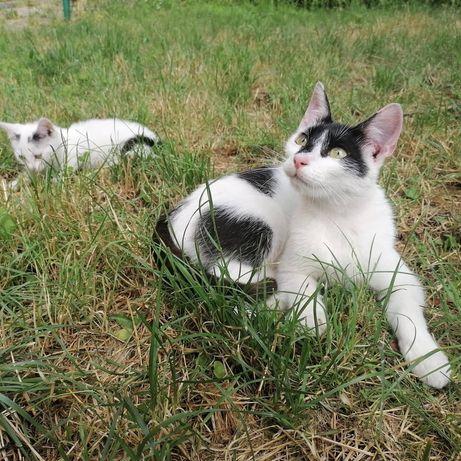 Daj dom! 3 kotki szukają dobrych ludzi