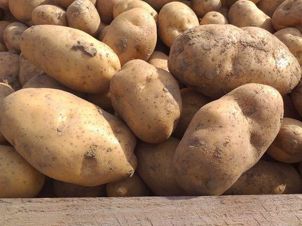 Sprzadam ziemniaki