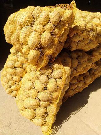 Ziemniaki jadalne soraya, pyszne, zółte,do jedzienia lub do sadzenia.