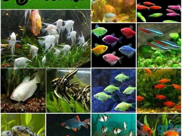 Никополь, Рыбки,опт,розница, отправка по Украине