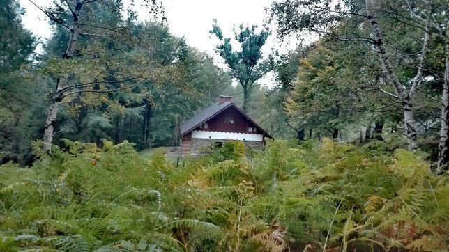 Chata w środku lasu - Agroturystyka - Góry - Beskidy - Cisza