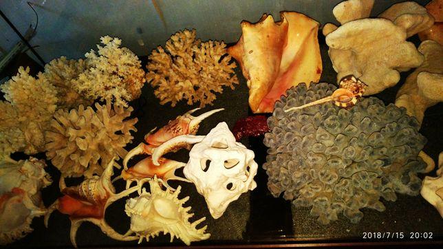 Цветные кораллы и ракушки, большие, в ваш аквариум.