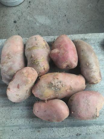 Batatas Novas 0,40€/kg