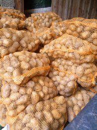 Sprzedam ziemniaki jadalne i wielkości sadzeniaka  żółte,czerwone