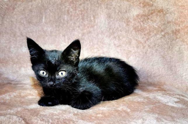 Чудесный черный котенок в добрые руки
