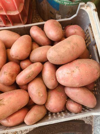 Batata p/venda em modo de producao biologica