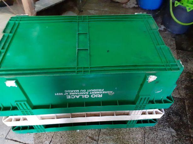 Caixas de plástico para transporte de uvas