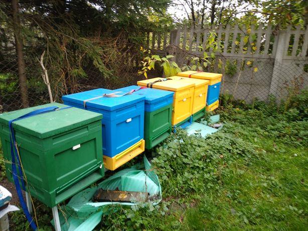 Rodziny pszczele dadant i wielkopolskie ule z pszczołami odkłady