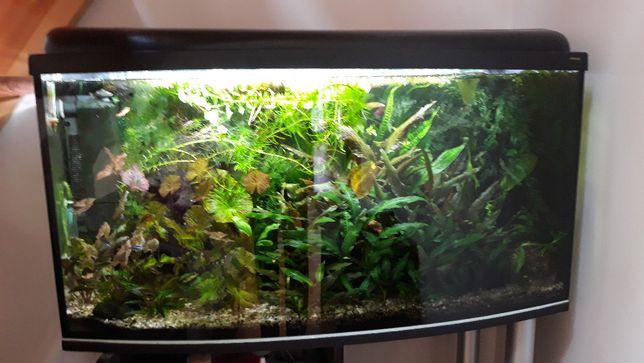 Akwarium Panoramiczne