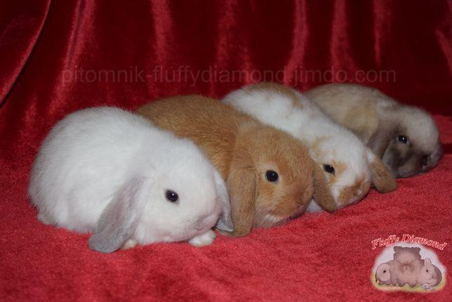 """Кролик из питомника """"Fluffy Diamond"""". Вислоухий крольчонок. Продажа!"""