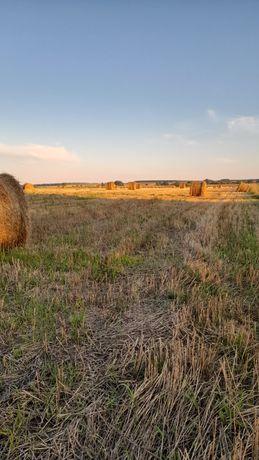 Gospodarstwo rolne 27 ha