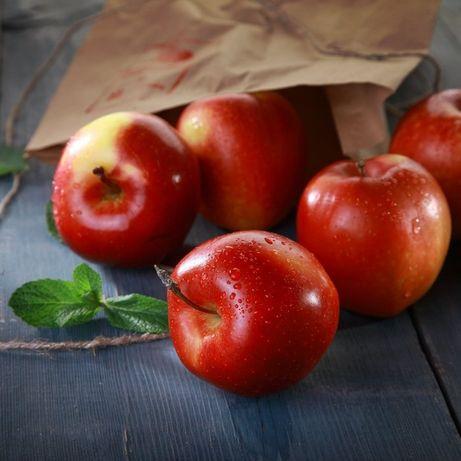 Яблука: Гала, Снєжка, Слава