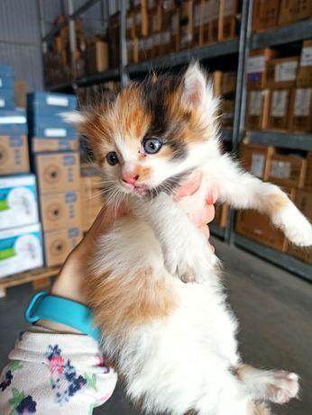 Маленька красуня кошеня котик кішечка