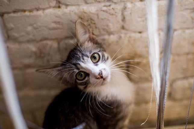 Отдам котёнка лесного окраса ,мальчик ,8 месяцев