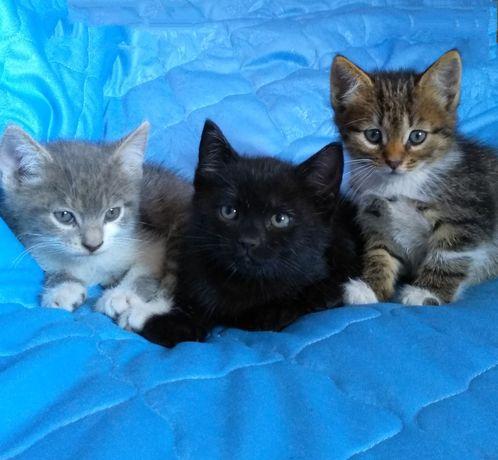 Котята кошенята котенок кошеня