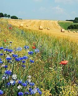 Продам земельный пай сельхоз назначения