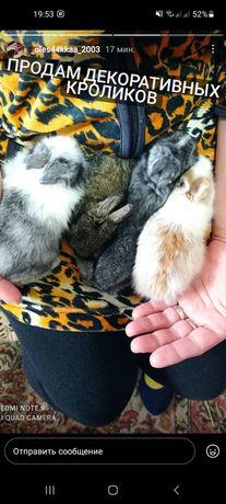Продам дикоративных кроликов
